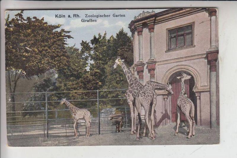 5000 KÖLN, ZOO - Giraffen 1928 0