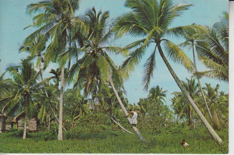 SINGAPORE - SINGAPUR, Cocoanut Plucker 1970
