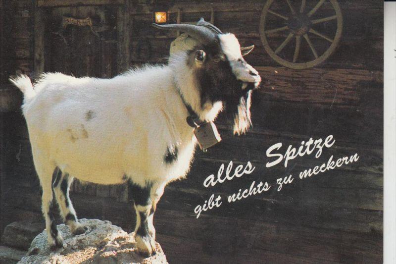 TIERE - ZIEGEN - Goats - Geiten - Chevres