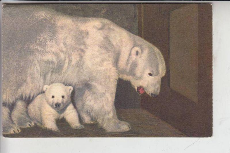 TIERE - BÄR - Eisbären - Polar Bear - Ours Polaire - Orso Polare - Ijsbeer - Oso Polar