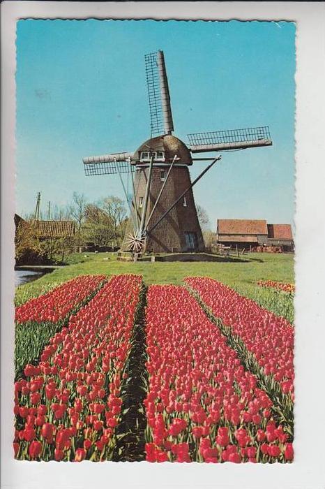 MÜHLE - Molen - mill, Windmühle Bloemenland Molenland / NL