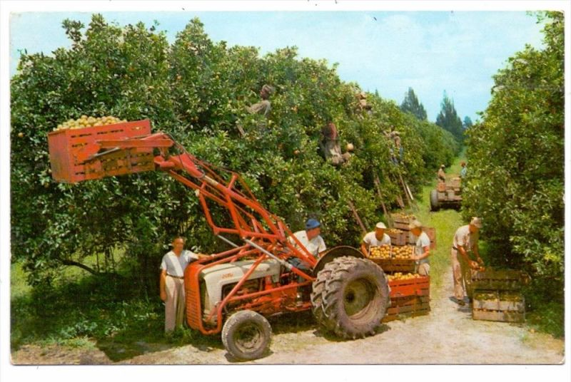 LANDWIRTSCHAFT - Orangen Ernte in Florida
