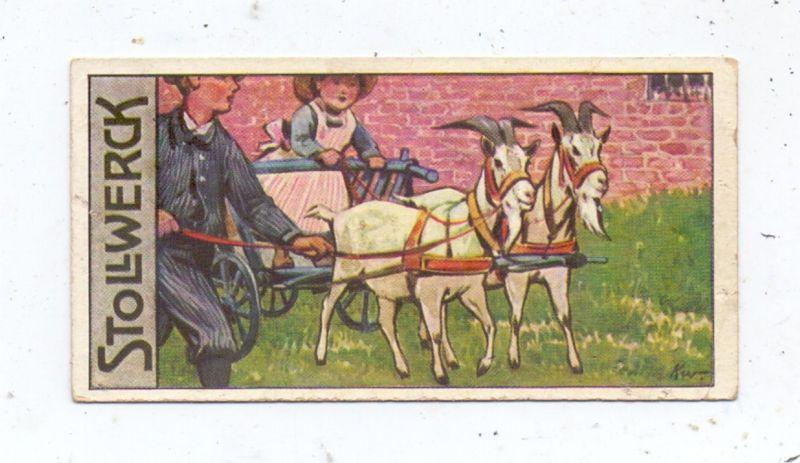 TIERE - ZIEGEN / Goats / Geiten / Chevres - Ziegenkarren, Stollwerk Sammelbild