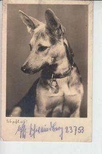 TIERE - HUNDE -Schäferhund - Chien de berge - sheperd dog - herdershond, 1939