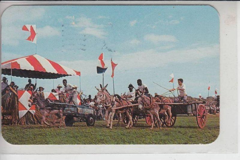 AMERIKANISCH ANTILLEN - St.Croix - Jonkey-Club, Donkey Cart Race