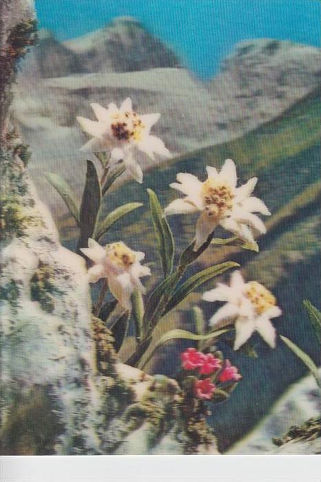 MATERIAL - 3D - Blumen - Edelweiss