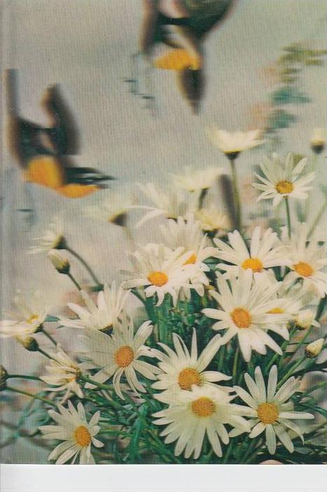 MATERIAL - 3D - Blumen - Margareten