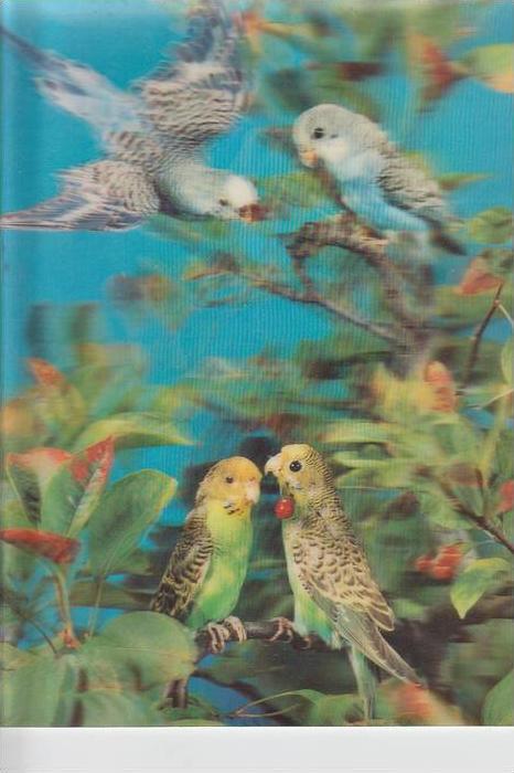 MATERIAL - 3D - Vögel - Wellensittiche