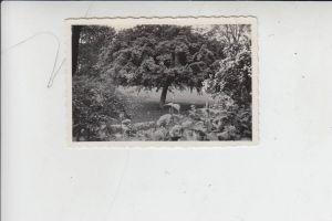 NL - GELDERLAND - RENKUM - OOSTERBEEK, Photo Maibaum bei Oosterbeek 1934