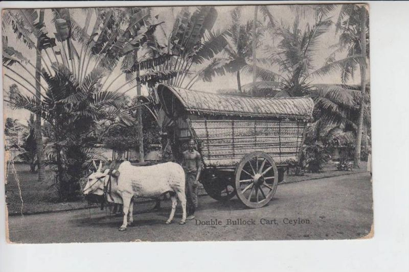 CL - SRI LANKA - CEYLON, Double Bullock Cart