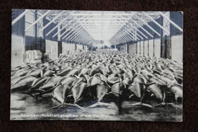 DK 9990 SKAGEN - Jütland, Fisch-Auktionshalle, Thunfisch, Tunfisk, Tuna, Thon