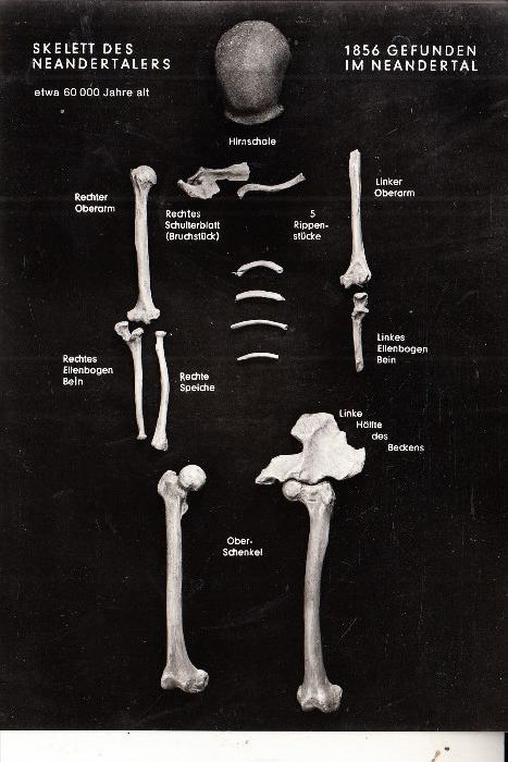 VÖLKERKUNDE / ETHNIC - Neandertaler Skelett