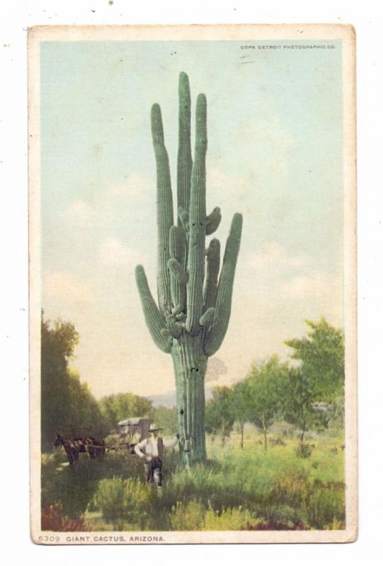 FLORA - Giant Cactus, Arizona