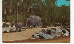 TIERE - ZOO San Diego - Elefanten