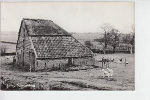 NL - NOORDHOLLAND - TEXEL - Schapenboet
