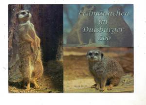 4100 DUISBURG, Zoo, Erdmännchen