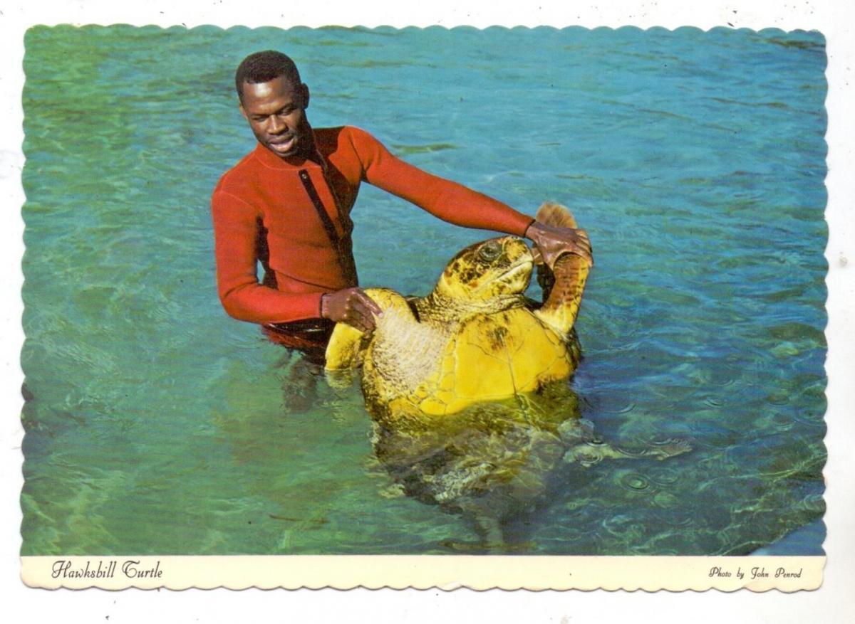 SCHILDKRÖTE / Turtle / Tortue / Zeeschildpad, Hawksbill Turtle, Bahamas 1979 0