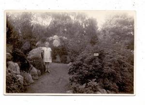 5000  KÖLN, FLORA, Partie aus dem Botanischen Garten, Photo-AK, 1929