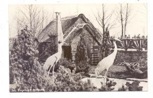 ZUID-HOLLAND - ALPHEN a/d. Rhin, Avifauna, Sartas-kranen, Zoo / Tierpark