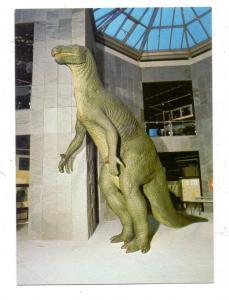 PRÄHISTORISCHE TIERE - IGUANODON-SAURIER, Naturkundemuseum Dortmund