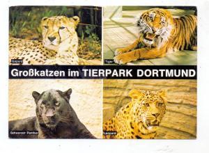 ZOO - DORTMUND, Tierpark, Grosskatzen, 1976