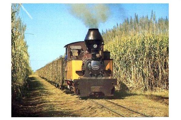 Farbfoto Schmalspurdampflok Perry fährt durch ein Zuckerrohrfeld in Queensland (Neudruck als Postkarte)