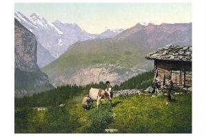 Altes Photochrome-Farbfoto Bauer beim melken einer Kuh auf der Wengern Alp (Neudruck als Postkarte)