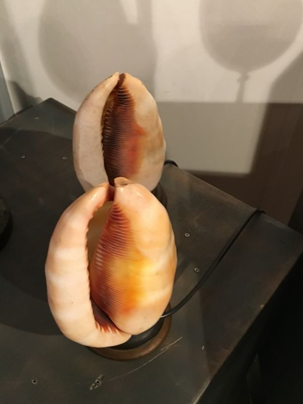 Zwei italienische Muscheln- Tischlampen  2