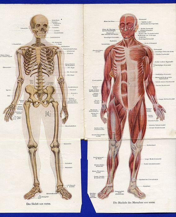 Medizin Anatomie Mensch Mann Frau Körper Schwangerschaft Modell