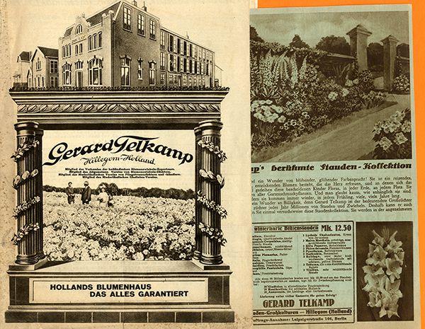Holland Hillegom Gartenbau Telkamp Blumen Samen Katalog von 1929