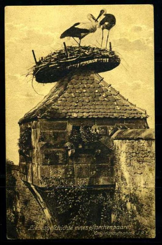 K3386)Ansichtskarte Storch