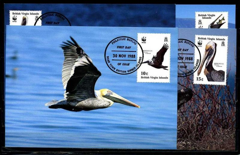 X2510)Brit. Virgin Islands Maxi-Karte WWF 73 Brauner Pelikan
