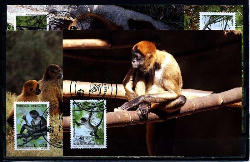 X2520)Honduras Maxi-Karte WWF 96 Klammeraffe