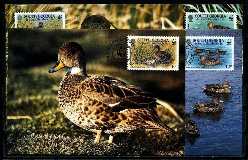 X2528)Falkland - South Georgia Maxi-Karte WWF 124 Spitzschwanzente