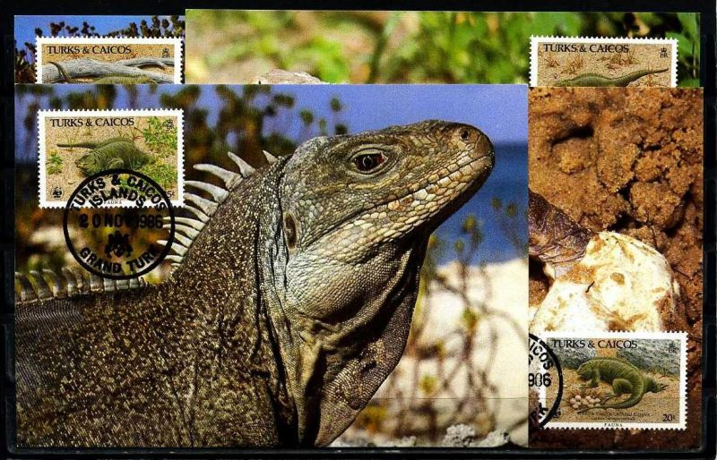 X2557)Turks & Caicos Maxi-Karte 777/80 WWF 42 Turks & Caicos-Leguan