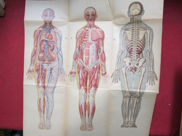 Mein Körper; Sonderbd.: Der Ratgeber. Ein medizinisches Sammelwerk. EUR