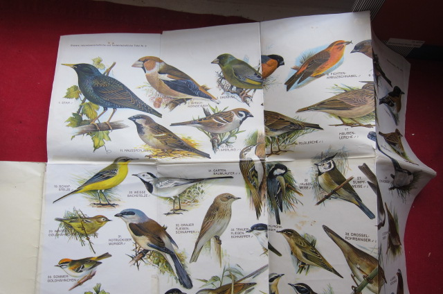 Einheimische Singvögel; Grasers naturwissenschaftliche und landwirtschaftliche Tafeln, Nr. 9. EUR