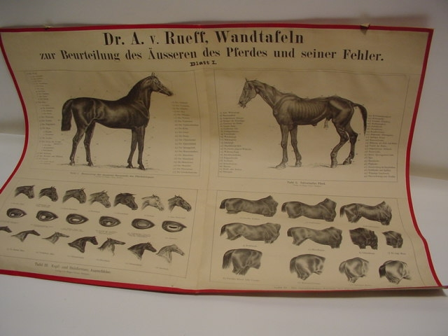 D217/ Sammlung  aus Reitschule ca 500  Dias / 2 Wandtafeln