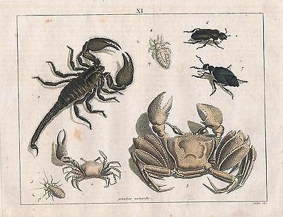 1800 krabbe skorpion krebs laus totengr ber k fer kupferstich nr gn 23075 oldthing grafik. Black Bedroom Furniture Sets. Home Design Ideas