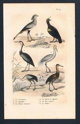 1840 - Sekretär Reiher Vögel Vogel birds antique print engraving Stahlstich