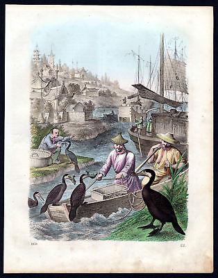 1858 Kormoran cormorant Fischfang Fischen fishing Lithographie lithograph