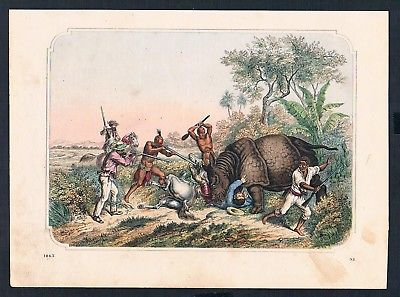1863 - Jagd hunting Nashorn Rhinozeros Afrika Africa engraving Stahlstich