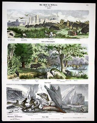 1890 Prärie Bison Büffel Elch Eisbär Jagd Indianer Münchener Bilderbogen