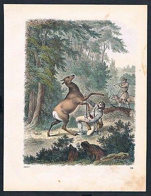1857 - Wald Rehe Jagd forrest deer hunting Original Lithographie lithograph