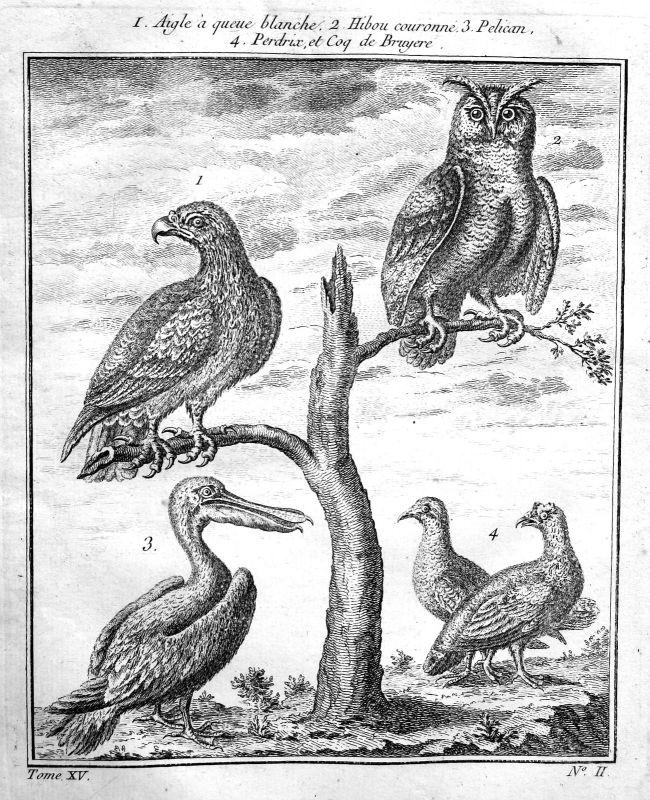 1750 Adler eagle Eule owl Pelikan pelican Vogel bird Kupferstich antique print