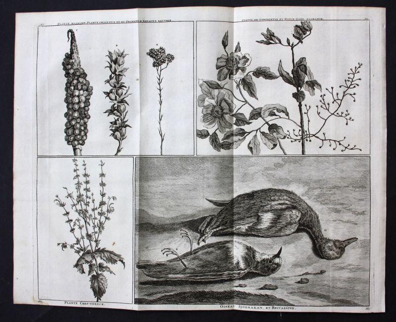 De Bruijn Isfahan Shiraz Persia Iran Orient Pflanzen plants Vögel birds 1718