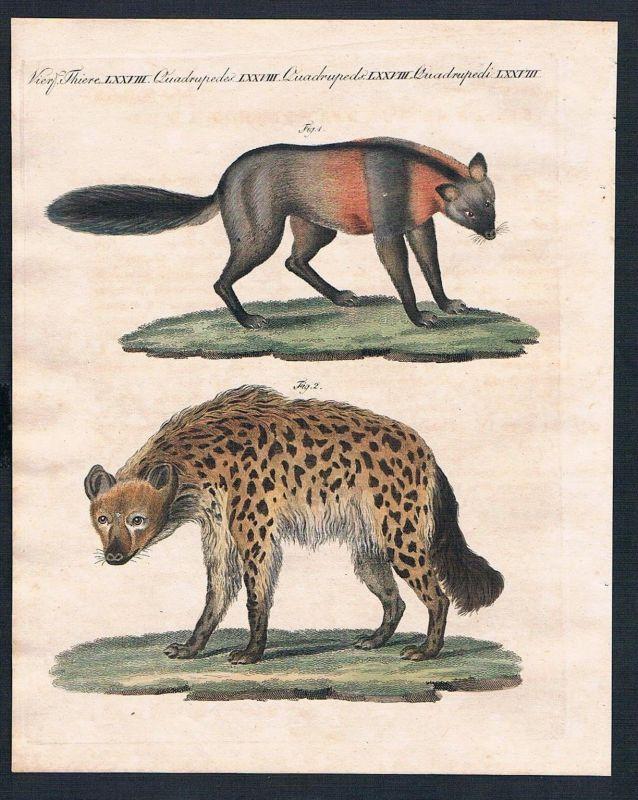 1800 - Kreuzfuchs gefleckte Hyäne fox hyena engraving Kupferstich Bertuch