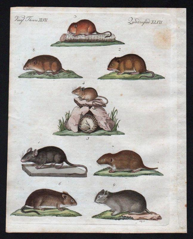 1800 - Maus Mäuse mouse mice Feldmaus Zwergmaus Bertuch Kupferstich engraving