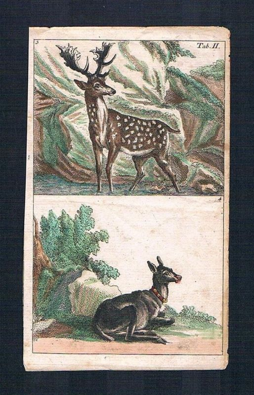 1800 - Hirsch Bock Hirschkuh deer stag animal engraving Original Kupferstich