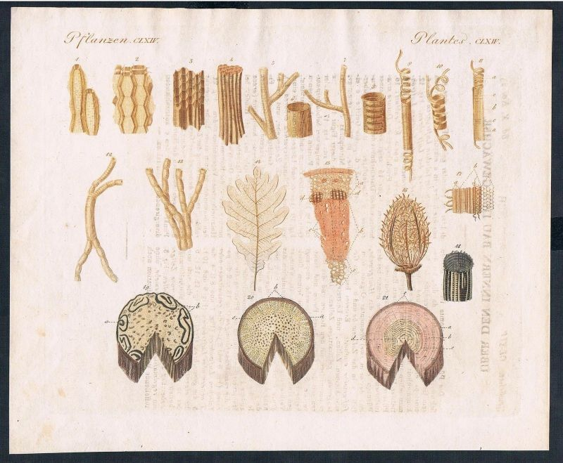 1800 - Anatomie Pflanzen Blumen flower plants engraving Kupferstich ...